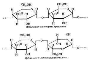Мономери і полімери